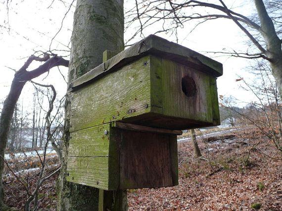 Foto: Nistkasten aus Holz mit Marderschutz (Quelle: Wikipedia)