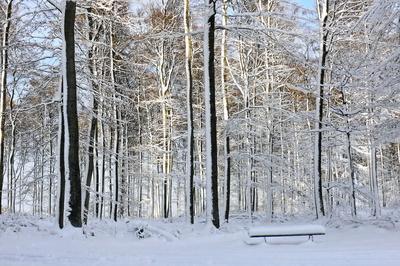 Winterwald-Foto: Rosel Eckstein/Pixelio