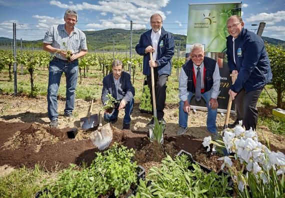 v.l.n.r.: Richard Kopf (WG Friesenheim), Fritz Link (Umweltakademie), Harald Rissel (Edeka Südwest), Helmut Kohler (Edeka Kohler), Rainer Huber (Edeka Südwest)
